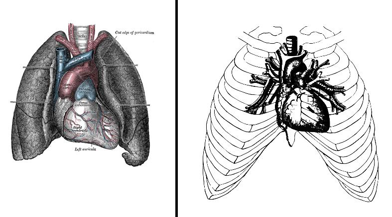 posizione del cuore nel mediastino e nella cassa toracica