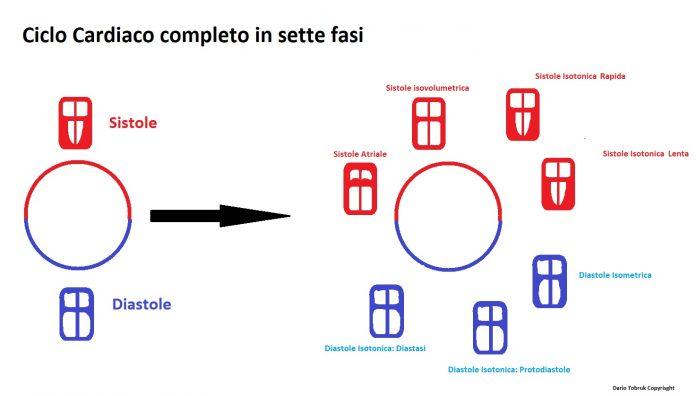 ciclo cardiaco riassunto e completo in sette fasi
